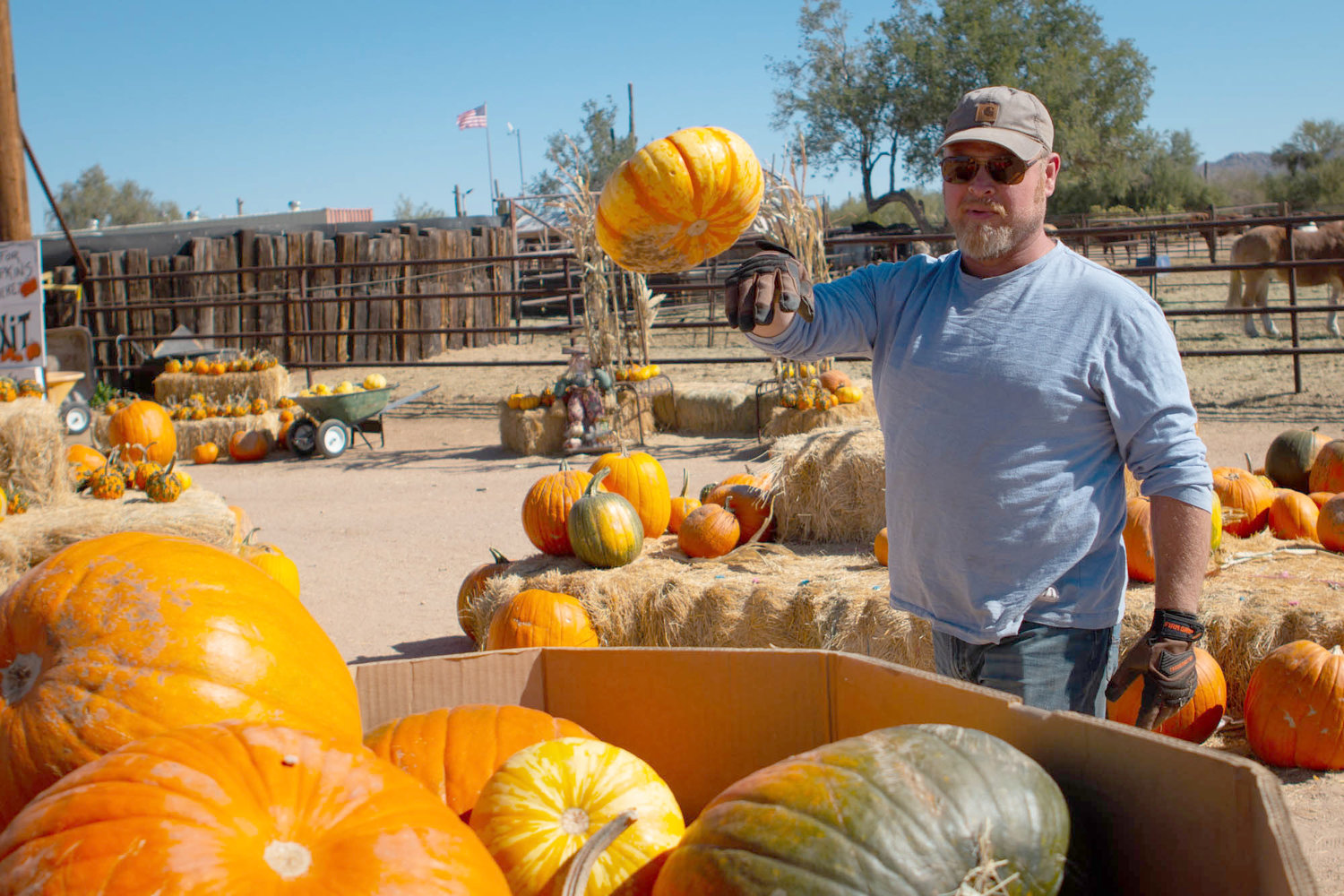 Brian Gates throws leftover Halloween pumpkins into a bin to be recycled and donated at MacDonald's Ranch in Scottsdale, Arizona, on Friday, Nov. 1, 2019.