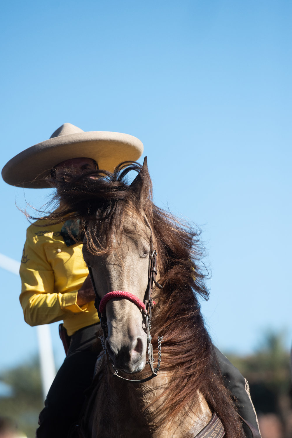 The annual ride of the Hashknife Pony Express is among coveted Western Week events.